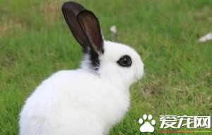 兔子为什么叫兔子 中国人叫兔子代表的意义